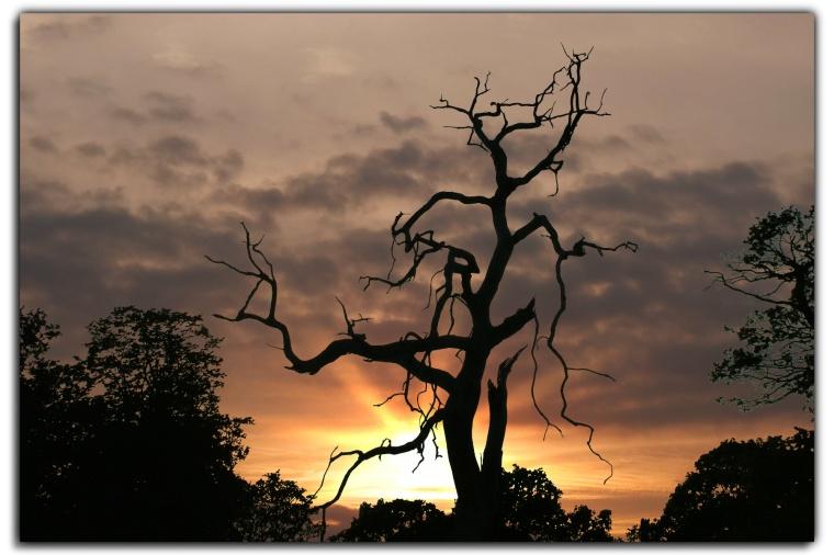crooked-tree