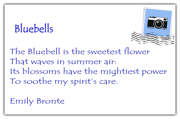 Bluebells postcard back